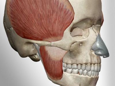 craniomandibulare-dysfunktion-cmd