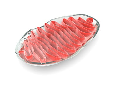 mitochondrien-und-umweltmedizin